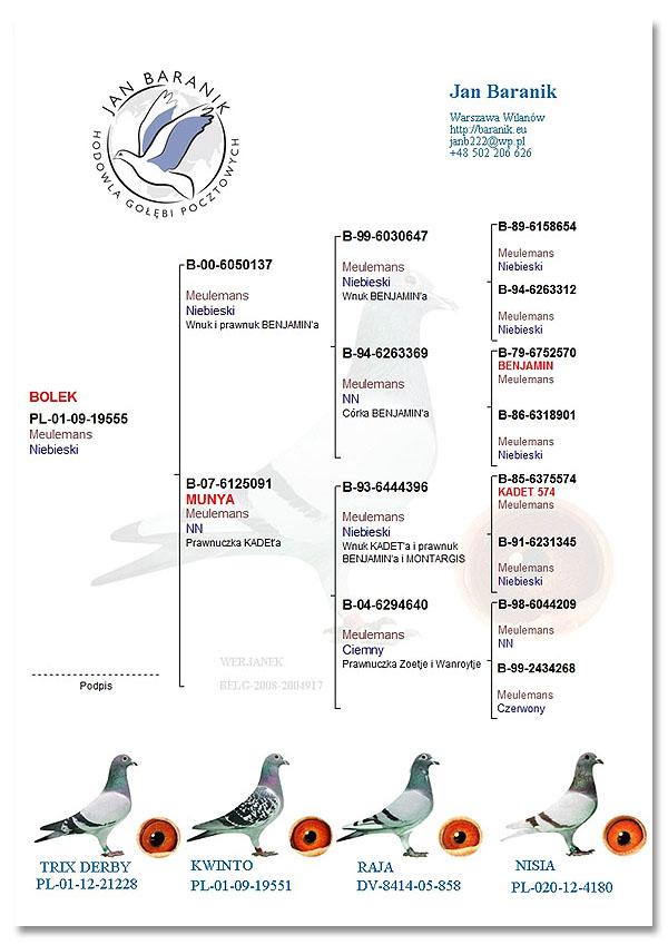 pedigree pigeon